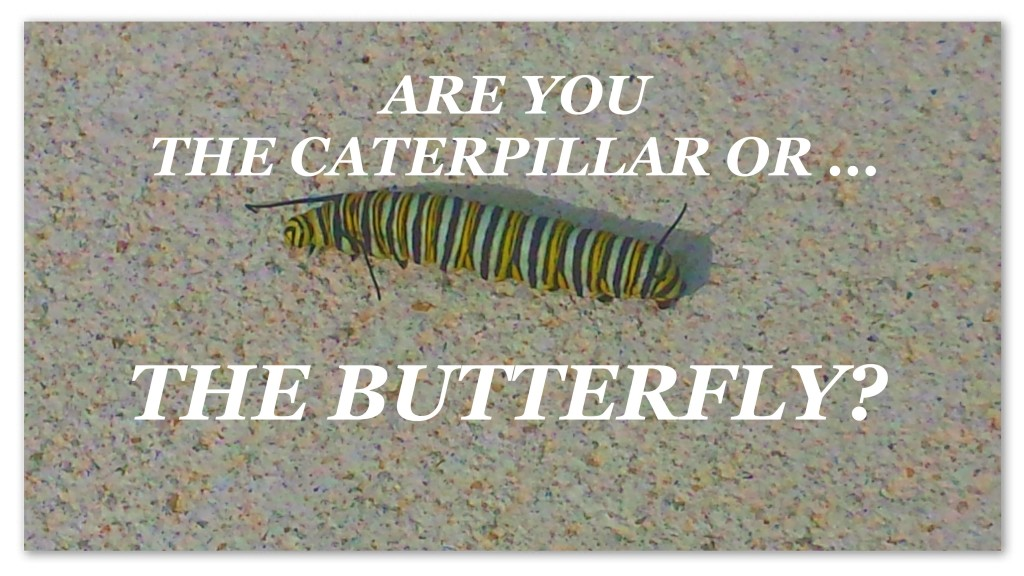 caterpillarbutterfly